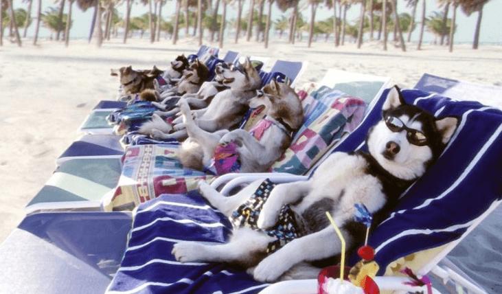 Woof! It's hot outside!